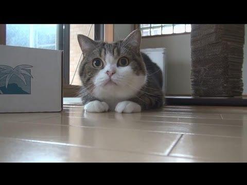 日本爆紅貓Maru~悠悠閒!