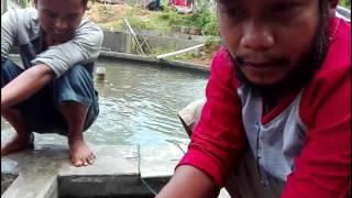 Video Teknologi Kolam Ikan Modern by : Febriyan MP3, 3GP, MP4, WEBM, AVI, FLV Desember 2018