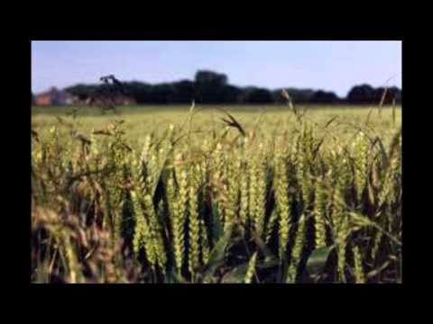 Lucky Dube - Reap what you sow