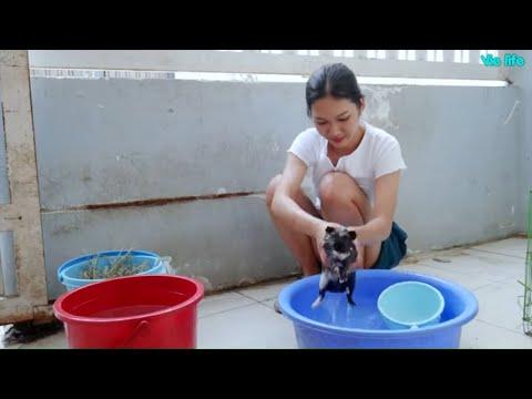 Dọn Dẹp Chuồng Chuột Lang Pet Cưng Của Vie Girl