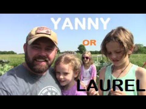 Beard oil - Yanny Or Laurel?!? THESE KIDS MINDS ARE BLOWN!?! So Confused!