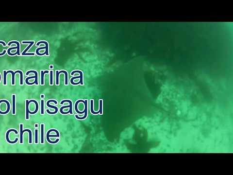 caza submarina maicol pisagua chile 2012