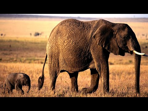 Elephant Mother And Baby!! Part 1