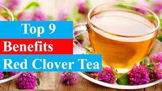 Top 9 Benefits of Red Clover Tea | Health Benefits - Smart Your Health