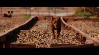 Nonton RED DOG (2011) - Official Trailer / HD Version Film Subtitle Indonesia Streaming Movie Download