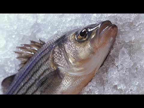 Antifreeze proteins prevent fish from freezing – creation.com