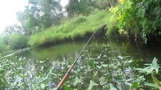 Голавль. Малая Река