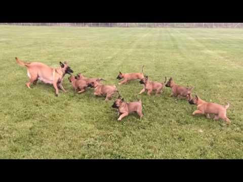 mamma-gioca-con-i-suoi-cuccioli-al-parco