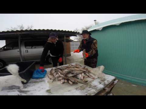 маныч рыбалка 2016 форум