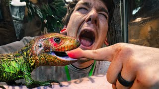 LIZARD BITES BRUCE!! MOM SNAKE HIDES AN EGG FROM ME!! BABY SKINK LIZARDS BORN! | BRIAN BARCZYK by Brian Barczyk