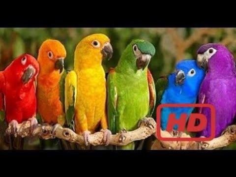 Video Documentary Birds Documentary Birds Parrots Majestic Birds Nature Documentary HD download in MP3, 3GP, MP4, WEBM, AVI, FLV January 2017