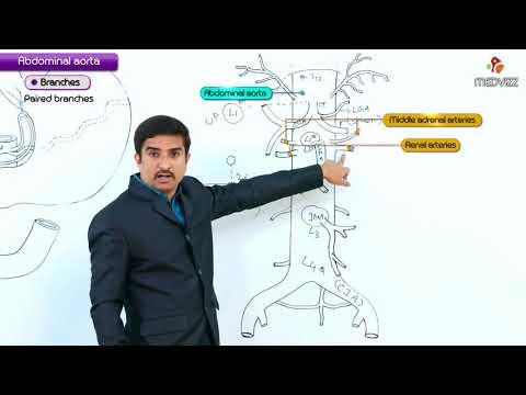 Abdominal aorta - Gross anatomy  ( Orign , Course , Branches )