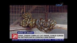 Video Sawa, Samar cobra at Cat snake, sunud-sunod na natagpuan sa loob ng ilang bahay MP3, 3GP, MP4, WEBM, AVI, FLV Februari 2019