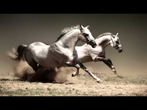 America - A Horse With No Name HD