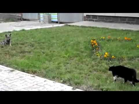 Cat beats up small dog