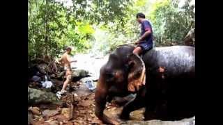 Elephants - Koh Chang, Thailand