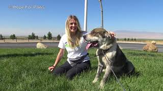 Hope For Paws rescuer dragged by 110 pound dog as she tried to save him! EPIC VIDEO!