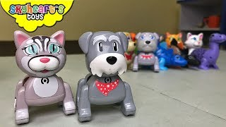 It's time to sing for our pet toys! We have Silverlit Digi Friends Lil Kittens, Lil'Puppies, Digibirds, and DigiDinos - and they all joined our singing contest! Guess what? They can sign as solo, as a choir or as a team - just make sure to sync them all together. They usually sing with children's songs for kids. All you need to do is clap or whistle. They tweet, roar, meow, bark and move!Perfect for kids who like animal toys for toddlers.[CLICK HERE] Subscribe to our channel for more fun and toyshttp://youtube.com/c/SkyheartsToysChannel?sub_confirmation=1