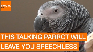 Video This Talking Parrot Will Leave You Speechless MP3, 3GP, MP4, WEBM, AVI, FLV Juli 2019