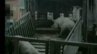 Meet your Meat PETA Part 2