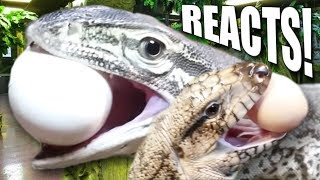 INSANE!! GIANT LIZARDS REACT TO EGGS FOR THE FIRST TIME AT THE REPTILE ZOO!! | BRIAN BARCZYK by Brian Barczyk
