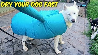 Video Fastest Way to Dry Your Dog! MP3, 3GP, MP4, WEBM, AVI, FLV September 2018