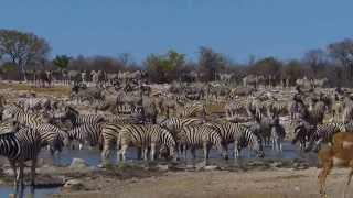 Etosha Namibia  city photo : At the Kalkheuwel Waterhole in Etosha National Park, Namibia