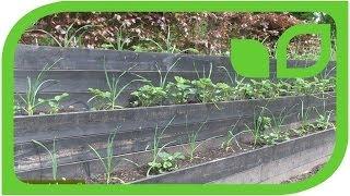 Der Gemüsegarten zu Ippenburg - 1. Mai 2014