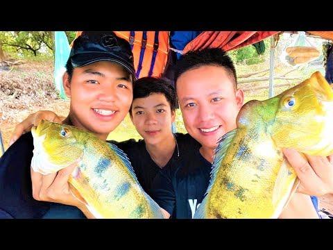 Câu Cá Peacock Bass Nguồn Gốc Từ Amazon | Tập 2 - Thời lượng: 15:59.