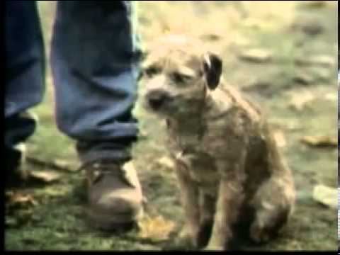 Funny budweiser dog commercials