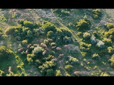 a Fly-in Safari