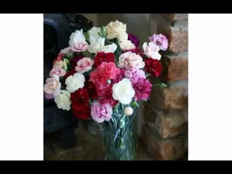 Cheap Flowers – thimborada