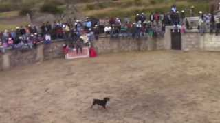 Video INCREIBLE EL PERRO MAS FANATICO A LA CORRIDA DE TOROS MP3, 3GP, MP4, WEBM, AVI, FLV November 2017