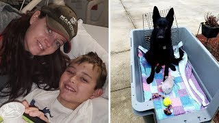 Stranger Drives Child's Dog Miles To Reunite Them After Learning His Story by Did You Know Animals?