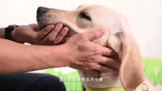 <h5>《香港導盲犬服務中心》 介紹 </h5>