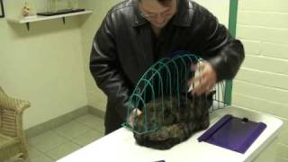 "Kitty with itchy skin, food allergies, and ""the cage"""