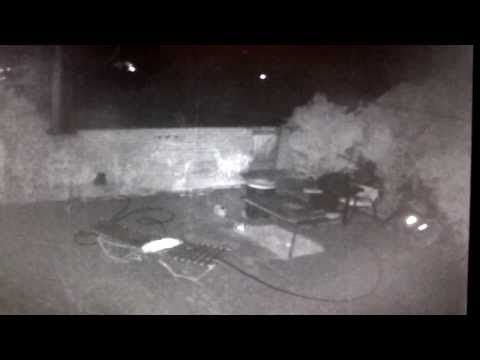 Tucson Az Light Orbs / Infra-red critters / Aliens / Spirits or Ghosts?