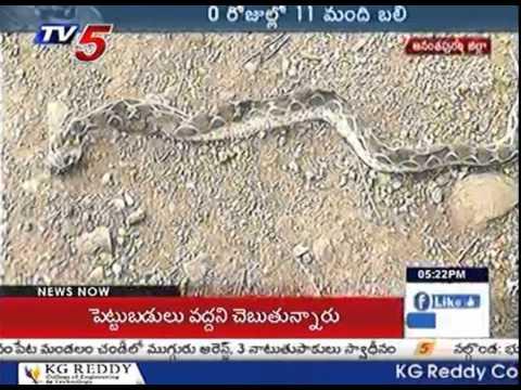 Anti-Snake Venom Shortage | Snake Bite Deaths in Ananthapuram
