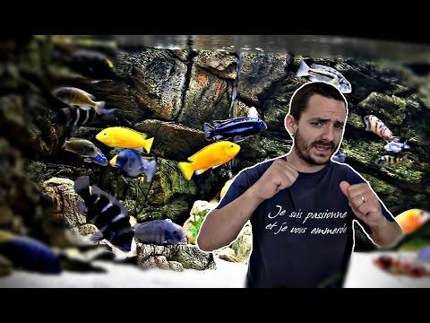 Présentation des aquariums d'un club d'aquariophilie