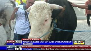 Video Presiden Jokowi Sumbang 2 Ekor Sapi Untuk Yogyakarta MP3, 3GP, MP4, WEBM, AVI, FLV Agustus 2019
