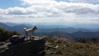 Nonton 2013 Appalachian Trail  Southbound With My Dog Film Subtitle Indonesia Streaming Movie Download