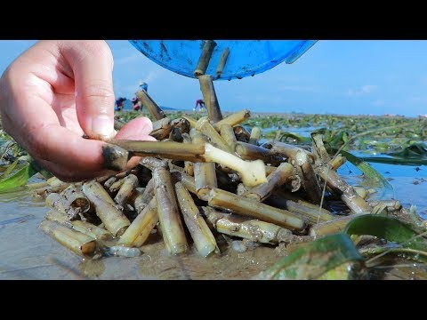 Yummy Razor Clam Cooking - Catching And Cooking Razor Clam At Ocean Shore - Cooking With Sros