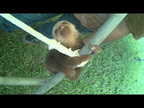 沒聽過樹懶叫的聲音?妳該逛逛小樹懶的森林樂園