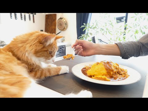 Check out this guy s cat while he masterfully cooks a Japanese