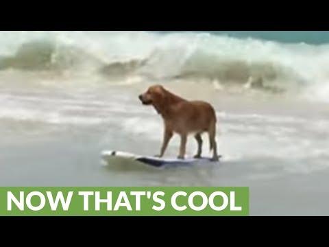il-cagnolino-sulla-tavola-da-surf