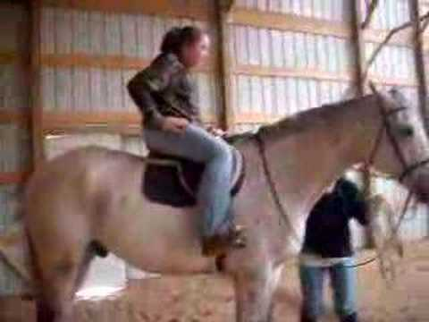 cats jumps on horse