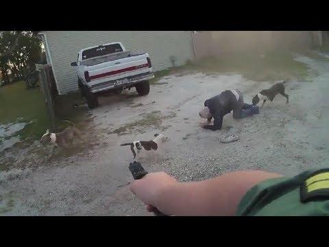 Nastolatek z dziadkiem kontra stado psów. W ostatniej chwili uratował ich policjant