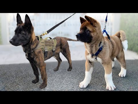 Top 10 Medium Sized Dog Breeds