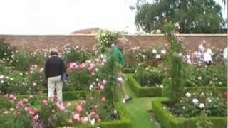 #112 Warum ich Englische Rosen liebe