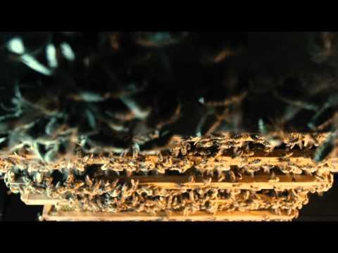 More Than Honey – Teaser